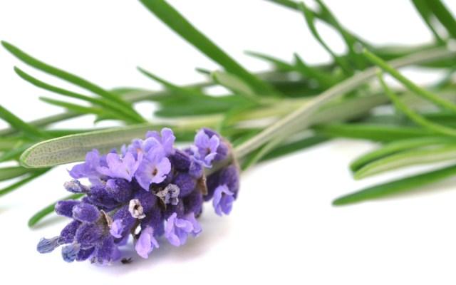 Ingredient Spotlight: Rosemary & Lavender